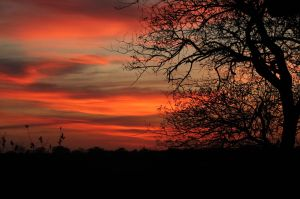 Africa Bushveldt Sunset