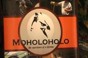 Moholoholo Logo
