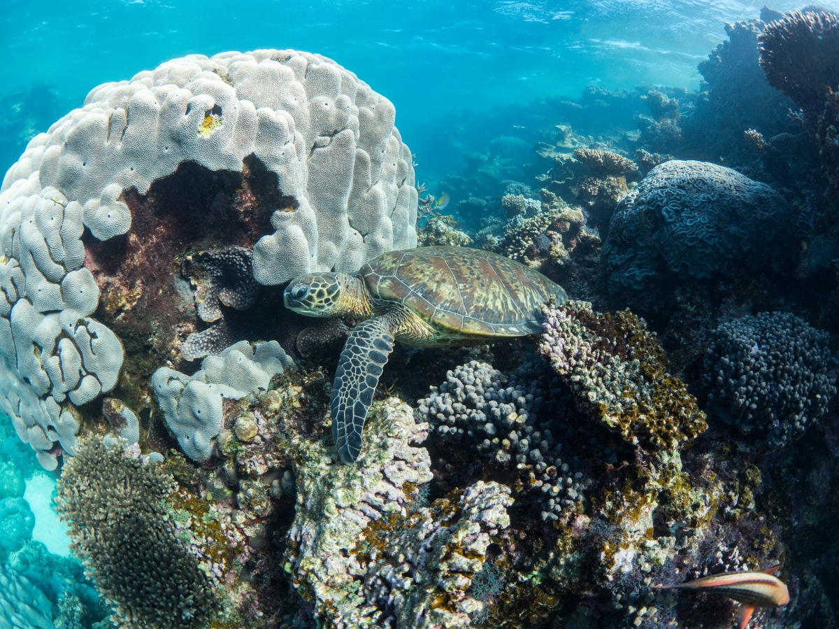 Ningaloo Reef RoadTrip